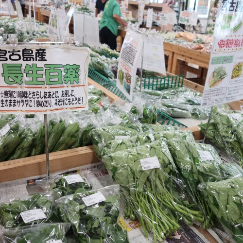 あたらす市場の島野菜