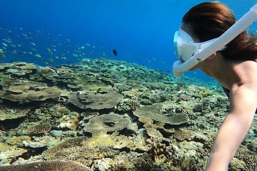 沖縄県北部・本部町のマリンショップCosmicOcean(コズミックオーシャン)のシュノーケリングツアー中のサンゴの写真