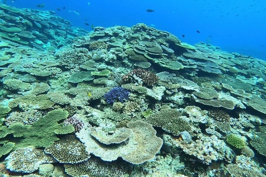 沖縄県北部・本部町のマリンショップCosmicOcean(コズミックオーシャン)のシュノーケリングツアー中の海の写真