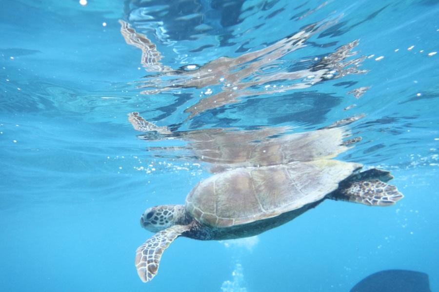 dicapac(ディカパック)で撮った水中写真