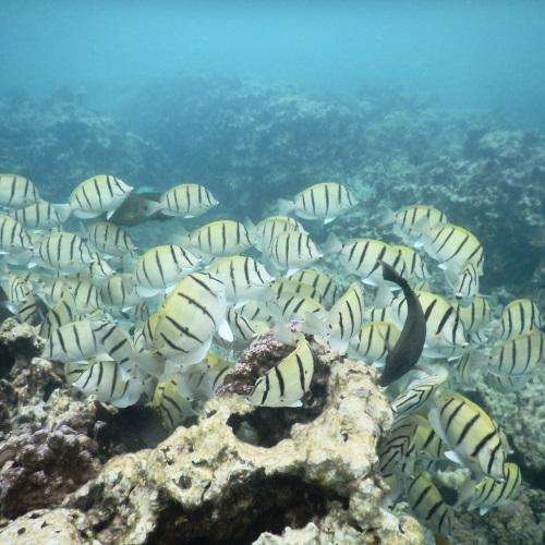 中の島ビーチの魚の多さ