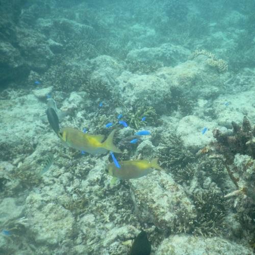 中の島ビーチで見られる熱帯魚