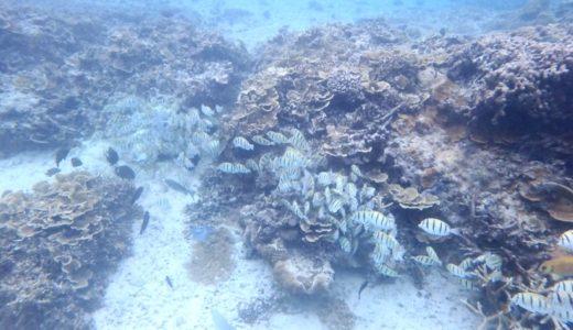 中の島ビーチは熱帯魚最多のシュノーケルスポット!知っておくべき情報すべて。