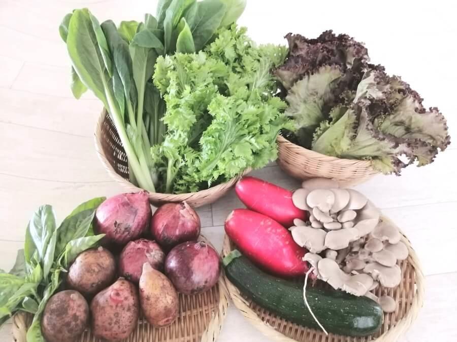 坂ノ途中の旬のお野菜セットを出したところ