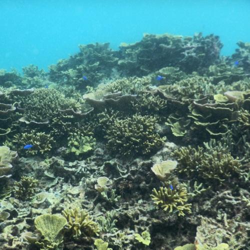 わいわいビーチのサンゴ礁