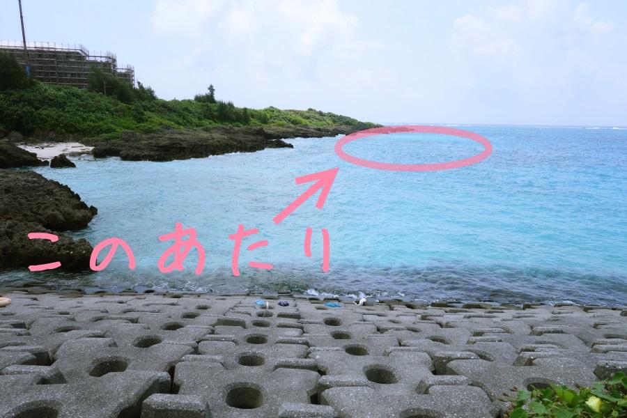 わいわいビーチのウミガメがいる場所