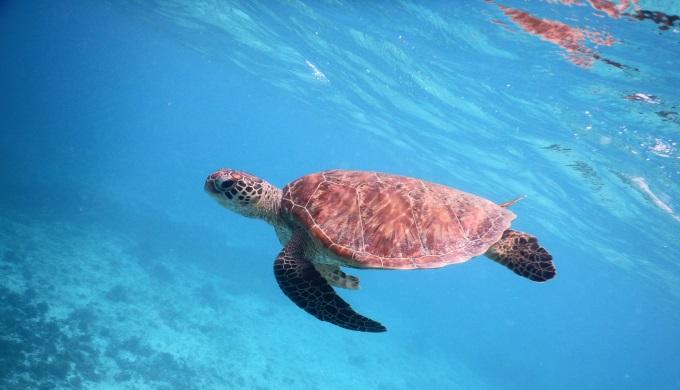 わいわいビーチでウミガメに会える時間と場所