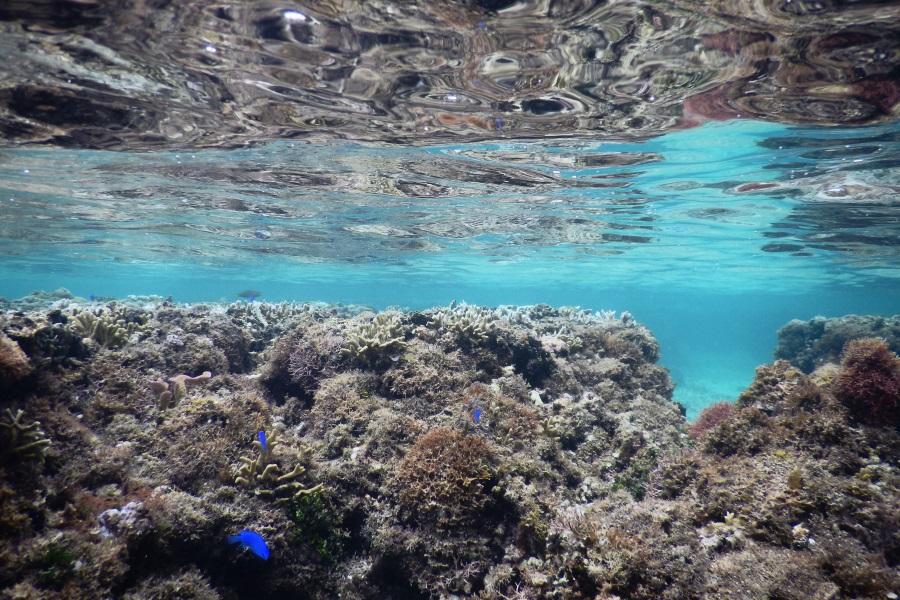 吉野海岸のサンゴ