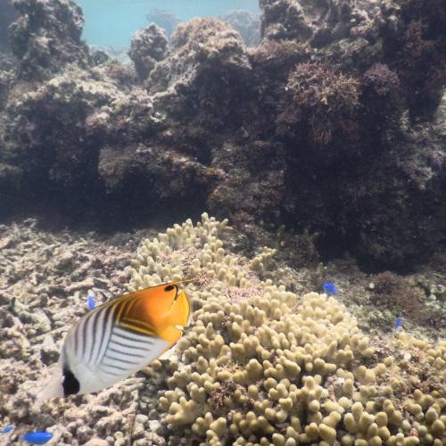 吉野海岸の魚