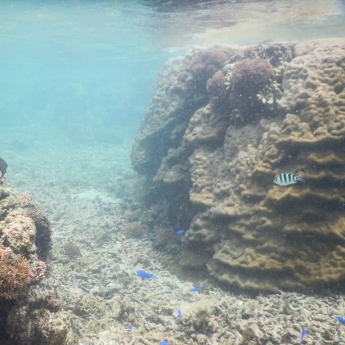 吉野海岸の熱帯魚